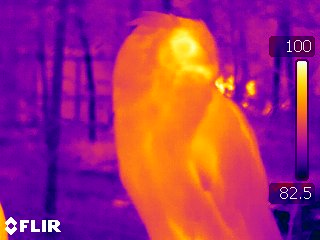 """Carolina Raptor Center"", ""Thermal Image"","
